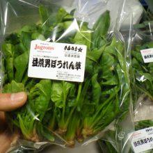 只今の益荒男ほうれん草情報2017.12.8