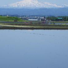 絶景!!仙北平野から見える田植え時期の雪をまとった鳥海山