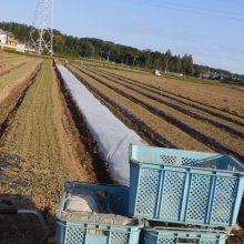 農園で一番長〜い畝(&名称変更のお知らせ)