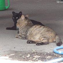 実は活躍?!、3匹の猫たち。