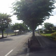 美郷町六郷地区の「ビバリーヒルズ」近くの枝豆圃場