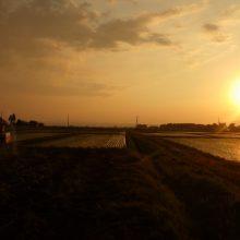 ジャグロンズ-マジック!!重粘土質圃場の畑地化