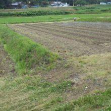 「風の谷の四ツ屋圃場」での威勢の良い植え付け風景